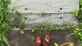 森の階段の写真・画像素材[1250724]