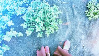 砂浜での足もと写真の写真・画像素材[1274458]