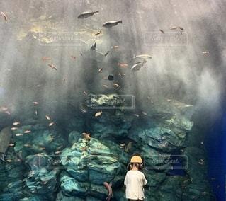 水族館の写真・画像素材[3636786]