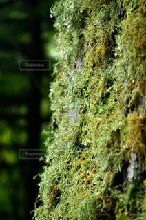 苔の写真・画像素材[1728152]