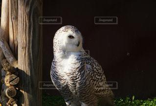 旭山動物園の猛禽類の写真・画像素材[2168162]