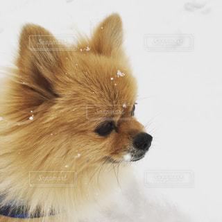 近くに犬のアップの写真・画像素材[1046118]