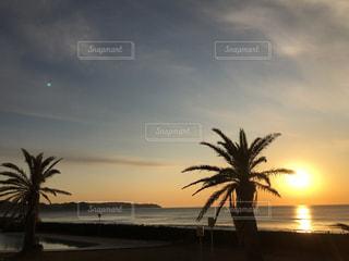ヤシの木と海と朝陽の写真・画像素材[1070775]