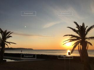 ヤシの木と海と朝陽の写真・画像素材[1070778]