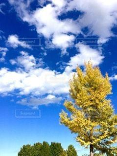 自然の写真・画像素材[34467]