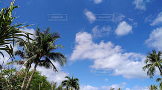 グアムの青空の写真・画像素材[1043181]