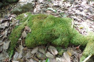 緑のモフモフの写真・画像素材[1043395]