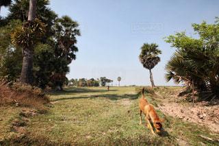 散歩中の犬の写真・画像素材[1043450]