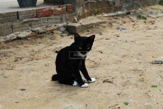 黒い子猫の写真・画像素材[1043460]