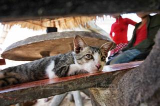 ベンチでくつろぐ猫の写真・画像素材[1043461]