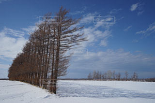 ザ・北海道の写真・画像素材[1043229]