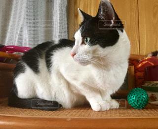 テーブルの上に座って猫の写真・画像素材[1043246]