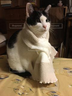 テーブルの上に座って猫の写真・画像素材[1044550]