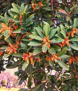 植物のアップの写真・画像素材[1058565]