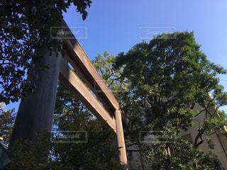 神社の鳥居の写真・画像素材[1069154]