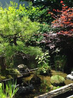 ミニ庭園の写真・画像素材[1043363]