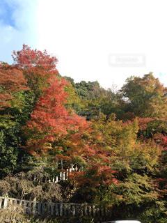 森の紅葉の写真・画像素材[1043410]