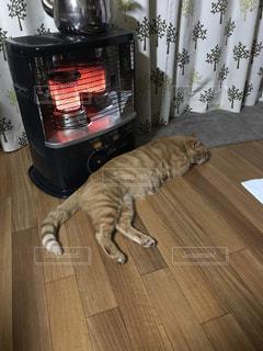 ストーブにあたる猫の写真・画像素材[1045274]