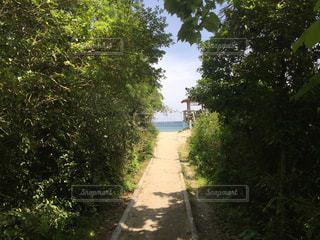 小道の先に木のパスの写真・画像素材[1043779]