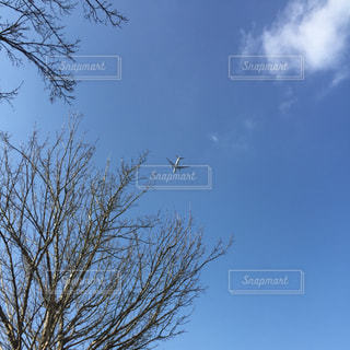 青空に飛行機の写真・画像素材[1043823]