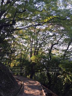 山道の写真・画像素材[1046760]