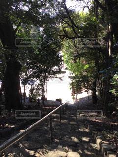 お寺の階段に落ちる木漏れ日 - No.1043954