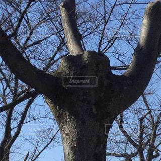 公園の木の写真・画像素材[1045493]