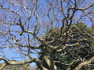 舞鶴公園の木の枝ぶりの写真・画像素材[1045519]