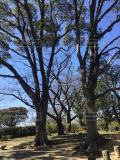 公園の木々の写真・画像素材[1045568]