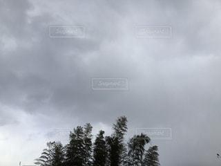 竹林の上に雲 - No.1045578