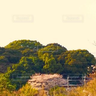 夕方の桜 - No.1087461