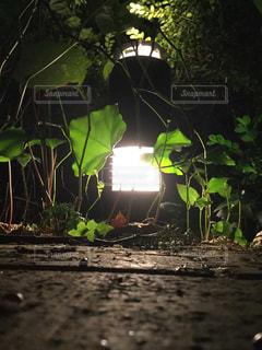 近くの植物のアップの写真・画像素材[1283784]