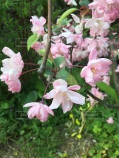 植物の上のピンクの花の写真・画像素材[3300577]