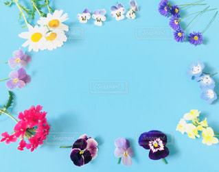 色とりどりの花のグループの写真・画像素材[1133320]