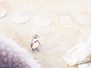 砂の中横になっている人の写真・画像素材[1043966]