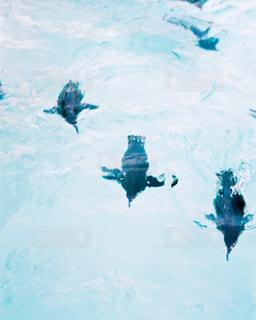 ペンギンの写真・画像素材[1043969]