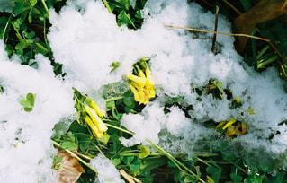 新鮮な雪の山の写真・画像素材[1045285]