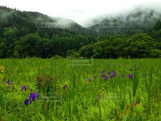 霞と緑の写真・画像素材[1044322]