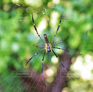 クモのクローズアップの写真・画像素材[2387794]