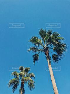 パームツリーの写真・画像素材[1044478]