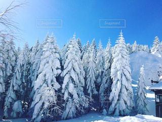 雪に覆われた斜面の写真・画像素材[1044415]