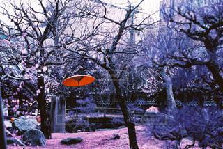 赤い傘と庭園の写真・画像素材[1044443]