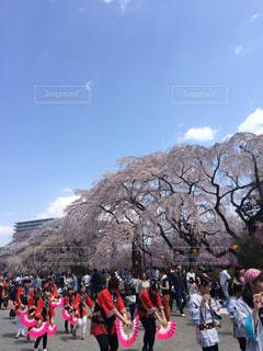 桜祭りの写真・画像素材[1044950]