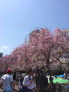 桜祭りの写真・画像素材[1044959]