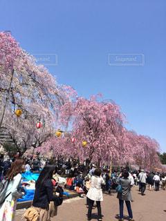 桜祭りの写真・画像素材[1044965]