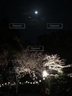 夜桜と月の写真・画像素材[1044949]