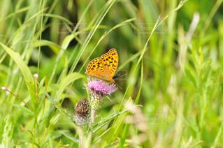 花にとまった蝶の写真・画像素材[1059604]