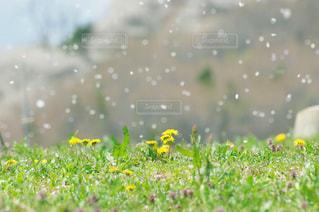 近くの花のアップの写真・画像素材[1067317]