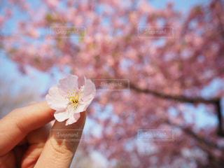 花を持っている手の写真・画像素材[1056682]