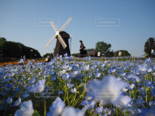近くの花のアップの写真・画像素材[1212522]